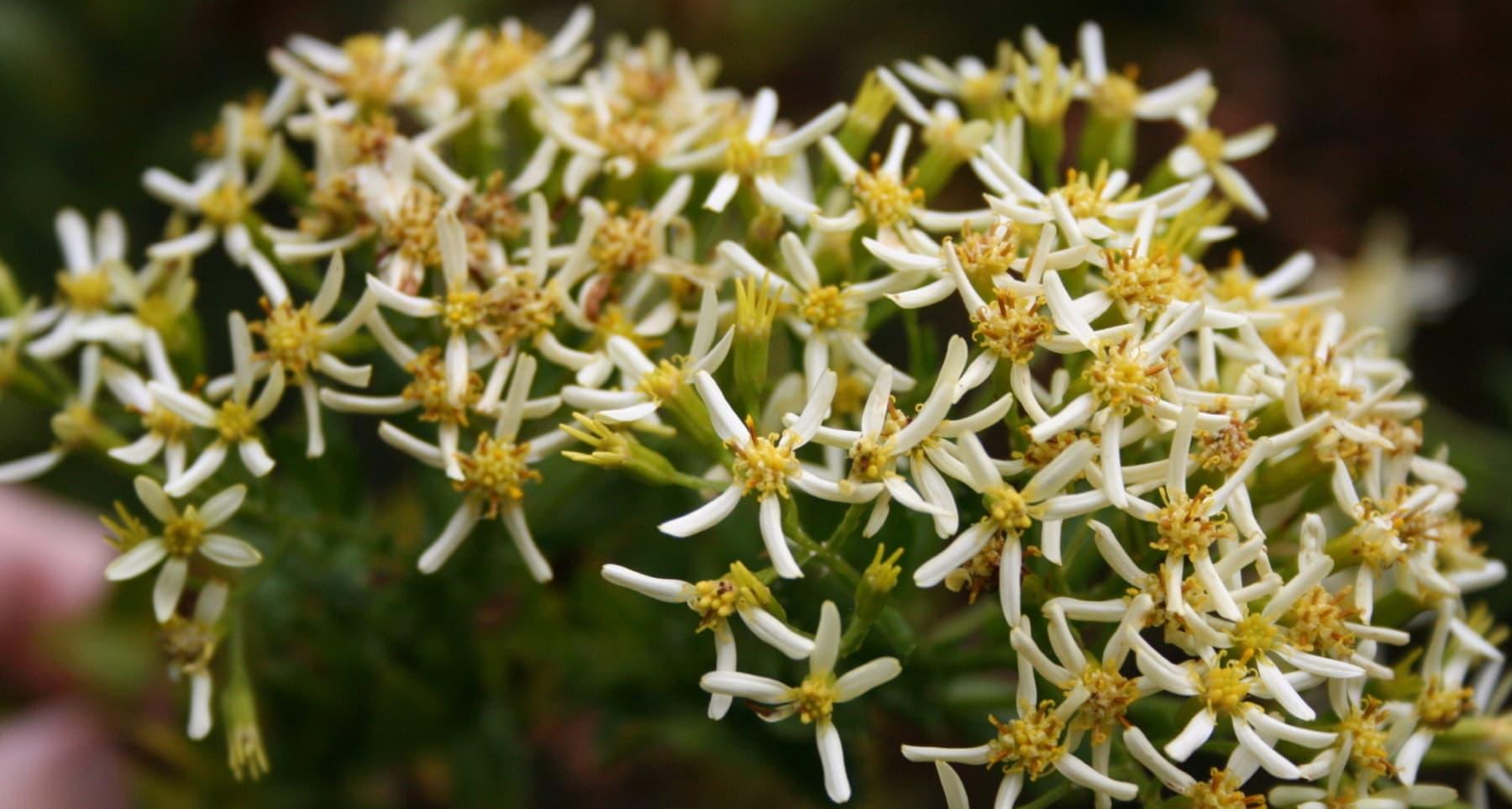 Formation en Phyto-aromathérapie appliquée à l'île de la Réunion